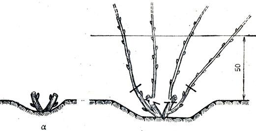 Схема первой обрезки (всегда