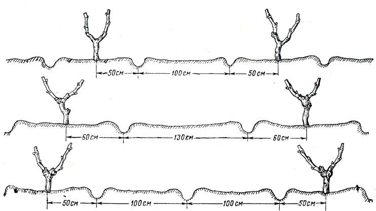Схема расположения борозд в