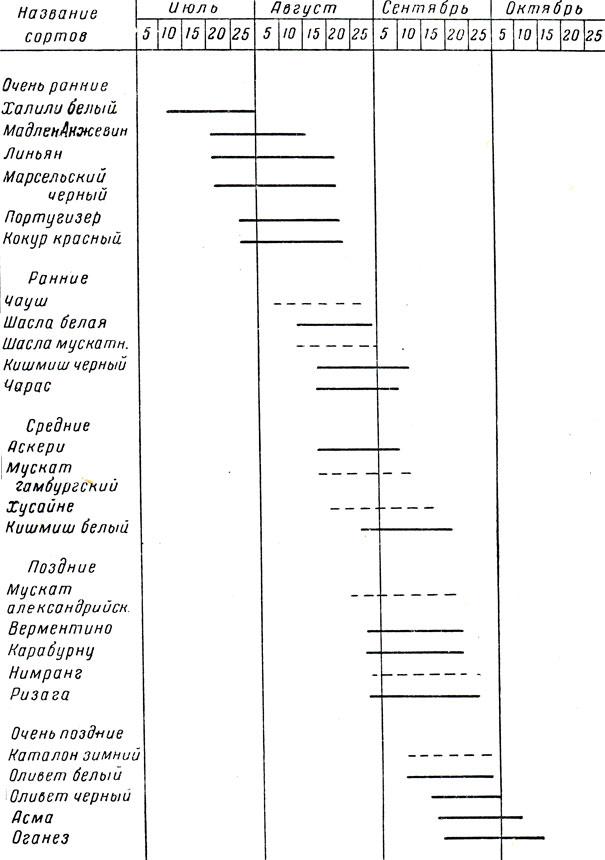 Схема подбора столовых сортов