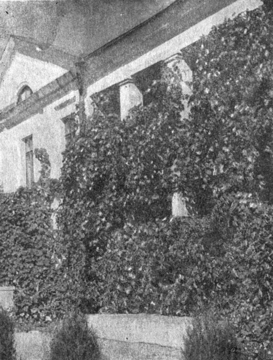 Рис. 17. Фасад дома Всесоюзной противофиллоксерной станции (Одесса), увитый виноградом